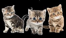 Dier van de maand: Kittens